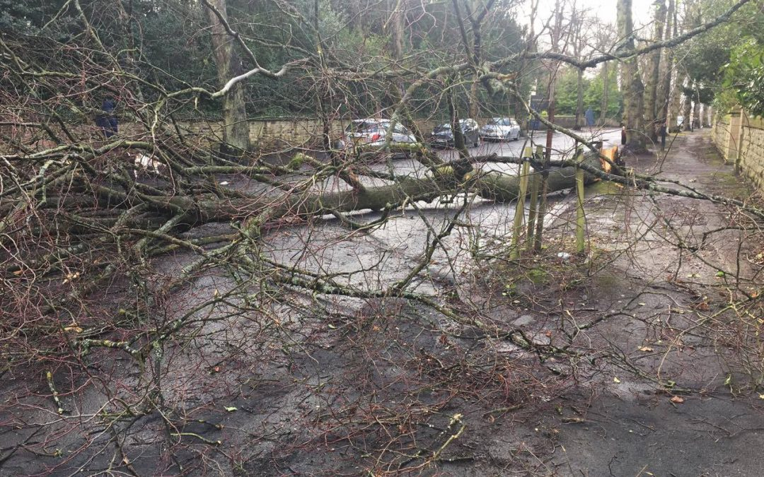 Trees, trampolines and…knickers? Casualties of storm Doris in Sheffield