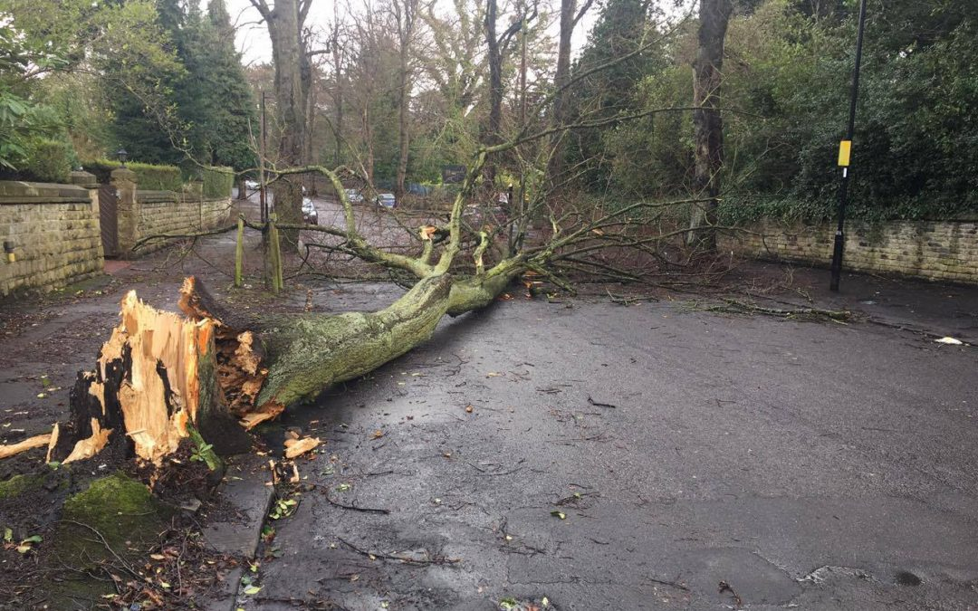 Top tweets from the day that Doris came to Sheffield