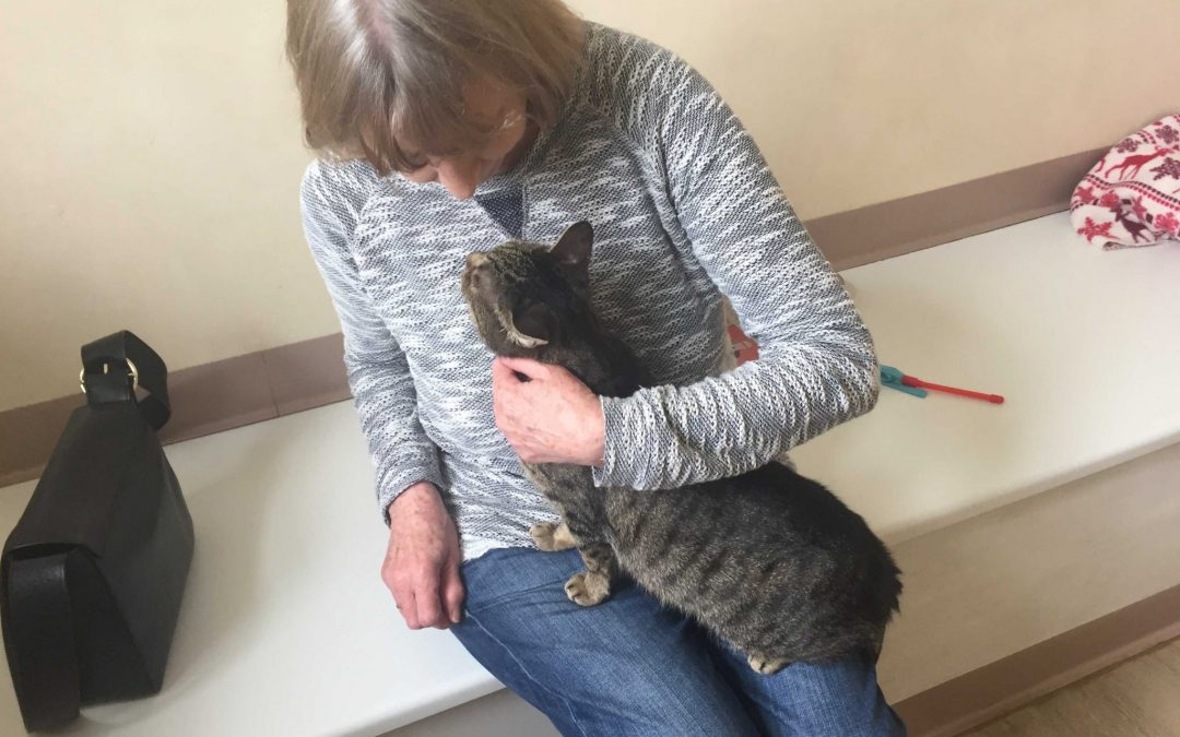 Sheffield Cat Shelter celebrates 120th anniversary