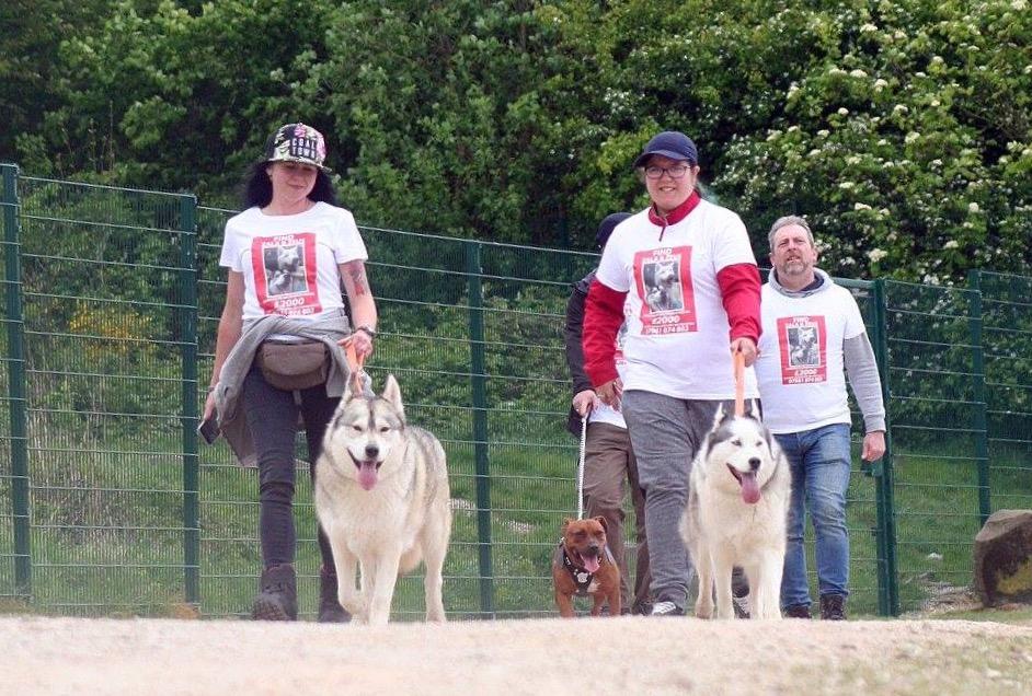 Sheffield bride postpones wedding to search for her stolen dogs