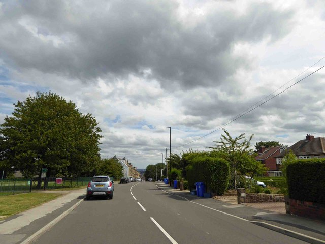 Sheffield Trees: Campaigners in Crookes prevent tree felling