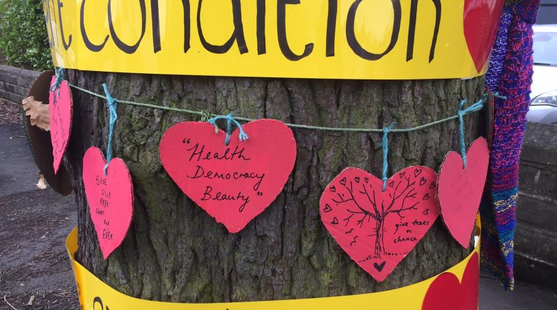 Protestor climbs 150-year-old Vernon Oak to impede felling