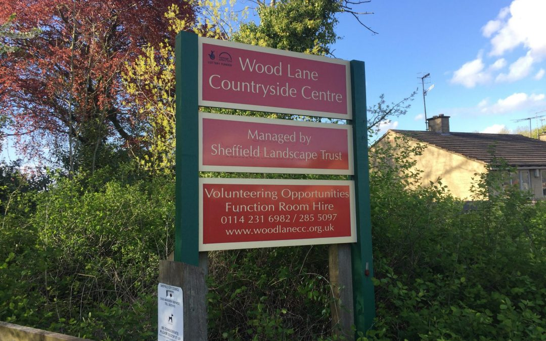 Sheffield Council suspended contractor after boy, four, injured by tree during felling incident