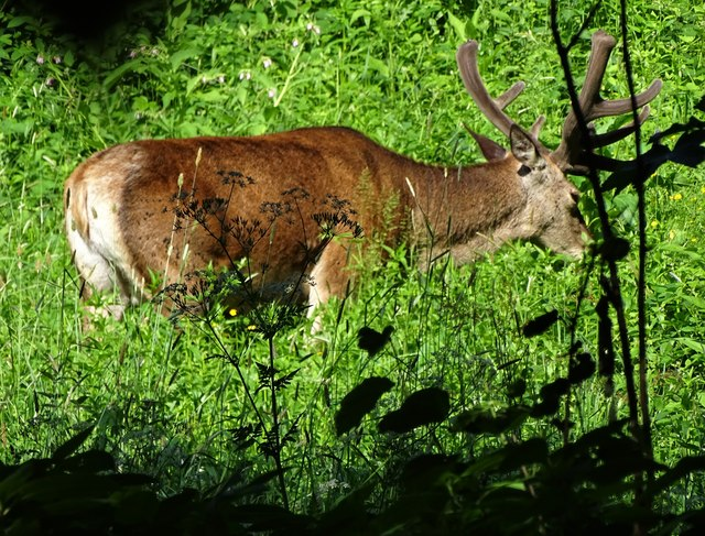 The Wildlife Trust urges government to protect wildlife in Sheffield.