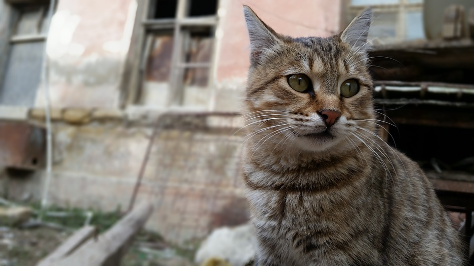 """Sheffield is in a """"cat crisis"""" as the RSPCA hold microchipping event."""