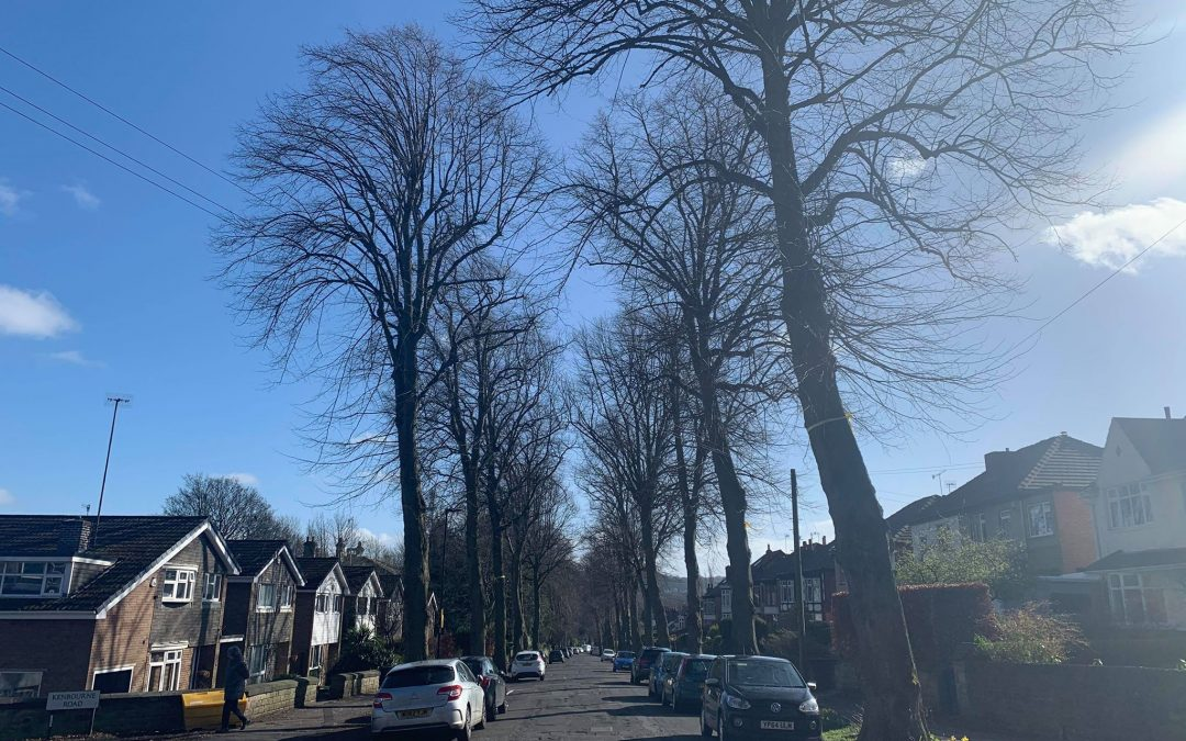 New strategy launched to prevent problematic tree felling