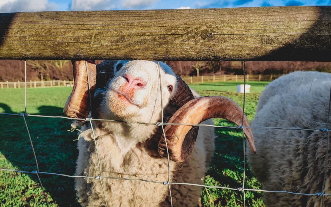 Today is the first-ever national City Farm Day!
