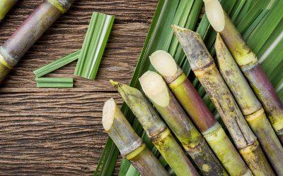 Barbados Sugar industry to explore biomass energy