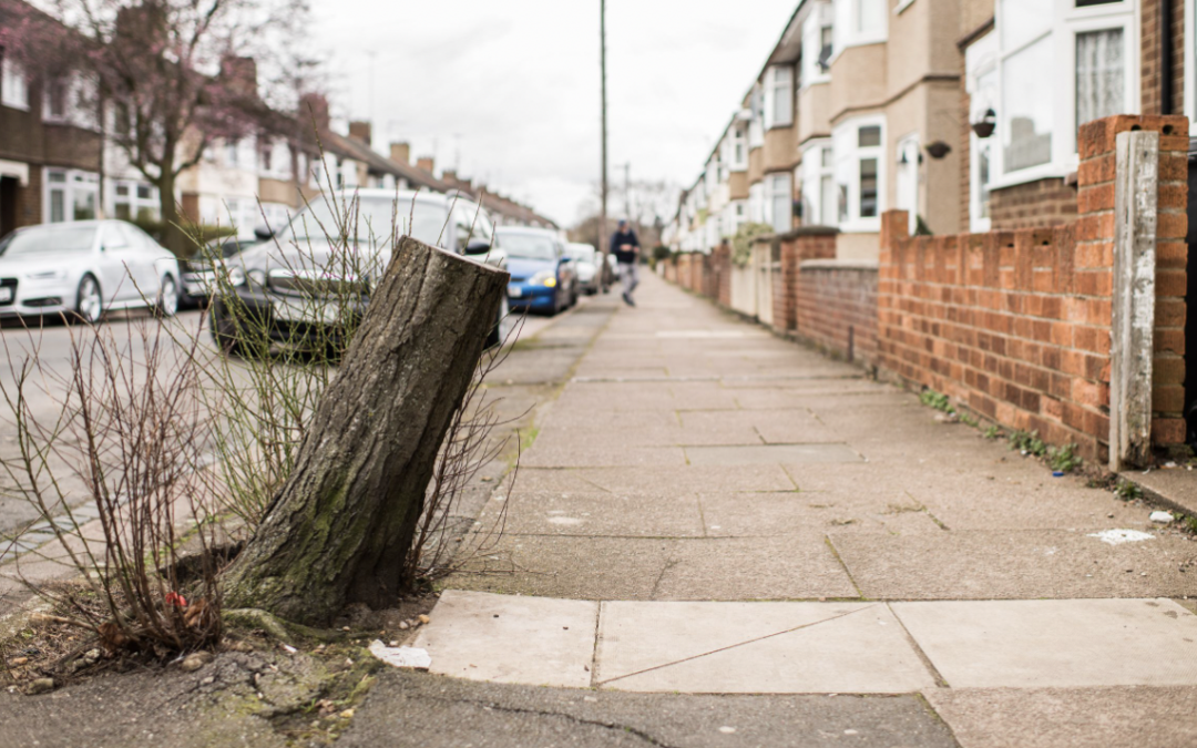 """Sheffield City Council """"forced"""" into changing tree felling approach, says environmentalist"""