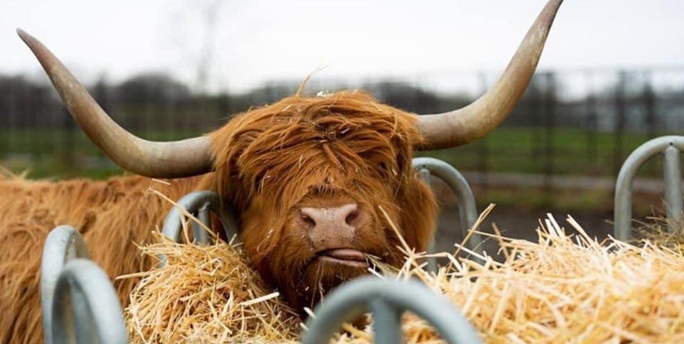 Graves Park's Animal Farm Visits Returns Successfully
