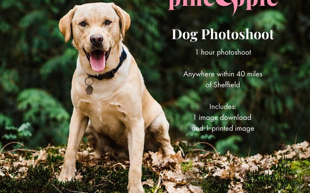 Sheffield Pet Food Bank offers dog photoshoot in raffle fundraiser