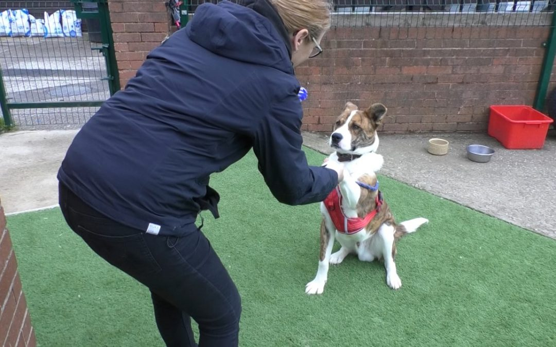 WATCH: Sheffield animal shelter under pressure from pandemic puppy crisis