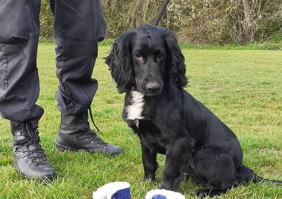 Meet The South Yorkshire Police Dog With A Rather Controversial Name